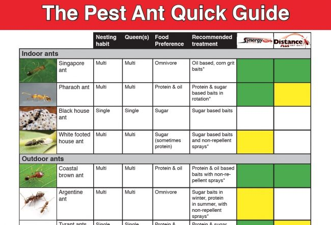 Pest ant guide