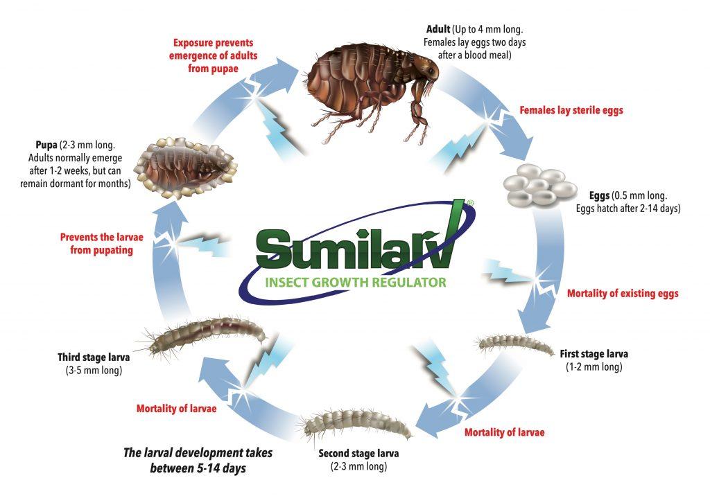 Sumilarv activity on flea life cycle