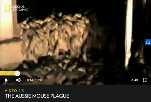 National Geographic Mouse Plague