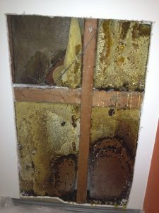 Bee nest in cavity wall image